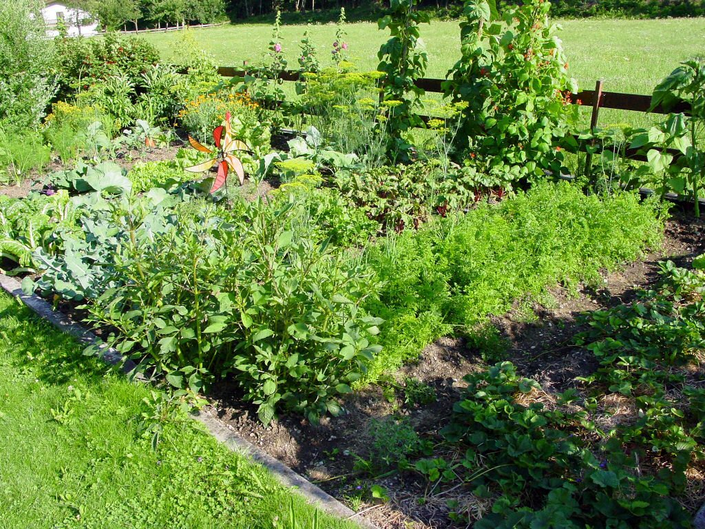 Kleiner Gemüsegarten