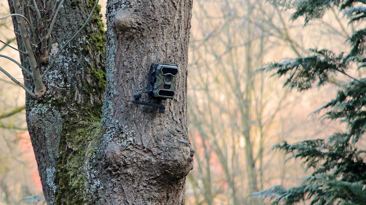 Wildüberwachnungskamera